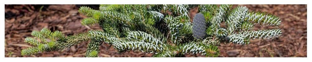 Добрива для хвойних і декоративних рослин