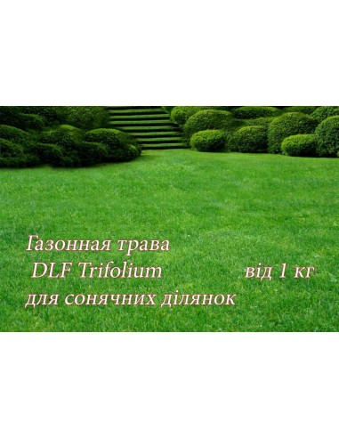 Газонна трава ДЛФ-DLF світлолюбна, 1 кг