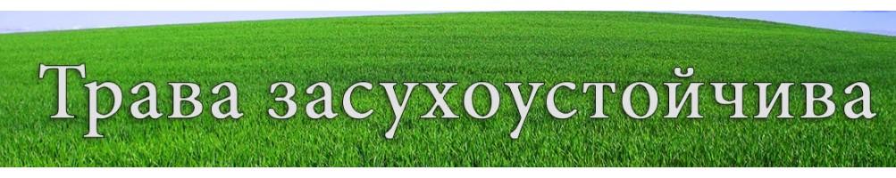 трава засухоустойчива